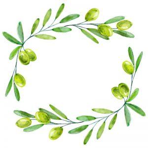 olivo galeo olivar de moura 35